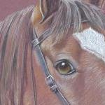 Olly - Bay Horse with bridle