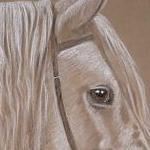 Crofter of Kewstoke - Highland Pony