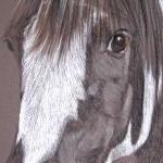 Bob - Piebald Pony