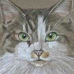 Peanuts - long haired tabby and white cat