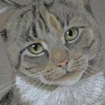 Sox - tabby and white cat