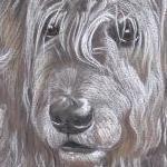 Willow - Irish Wolfhound