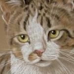 Wee Yin - tabby and white cat