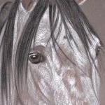 Quem Foi - Lusitano Horse
