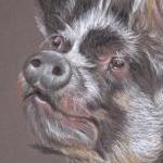 Kune Kune Pig Portrait - Blossom