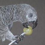 Parrot  - Mojo