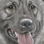Lexa - Elkhound