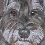 Sweep - Schnauzer Pup