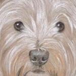 Maggie - West Highland Terrier