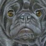 Logan - Black Pug