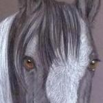 Vlass - traditional coloured horse