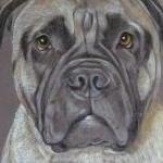 Bruno and Alf - collie x and bull mastiff