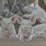 Sow in arch with Piglets and Farmer