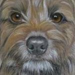 Moss - border terrier