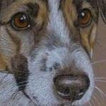 Mac- Jack Russell Terrier