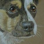 Charlie - terrier cross