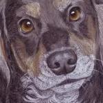 Ghillie's Portrait - Working Cocker Spaniel - tri-colour