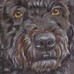 Spanish Water Dog - Ella's Portrait