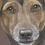 Snix - dachshund x jack russell