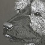 Crack - Patterdale Terrier