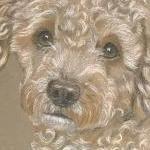 Lister - Poodle