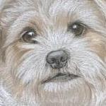 Meg - Terrier cross