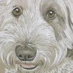 Bramble - Old English Sheep Dog