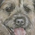 Rocky - Border Terrier