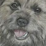 Mac - Border Terrier