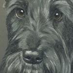 Fergus - Scottie Dog