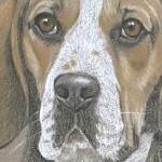 Merlot - Beagle