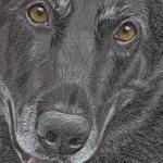 Layla's 2nd Portrait