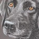 Tulah's 2nd Portrait