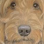 Reggie - Labradoodle Portrait