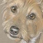 Scarlett - Terrier Portrait