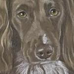 Meg - Sprocker Portrait