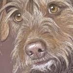 Tattie - terrier