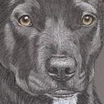 Pickle - Staffie - Black Staffordshire Bull Terrier Portrait