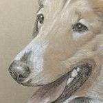 Lassie - Rough Collie Portrait