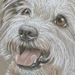 Poppy Jackahuahua Portrait