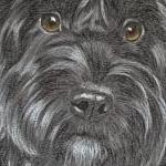 Gracie - Springerpoo Portrait