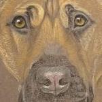 Elly - cross breed portrait