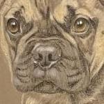 Bobby - French Bulldog Portrait