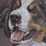 Gus - Bernese Mountain Dog Portrait