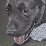 Peter - Patterdale Terrier Portrait