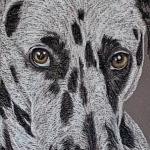 Meika - Dalmation Portrait