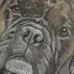 Max - Boxer Portrait
