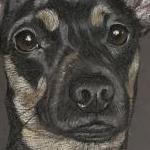 Reggie - Chiweenie Portrait