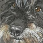 Tilly - wire haired Dachshund