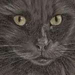 Tallie Black Cat